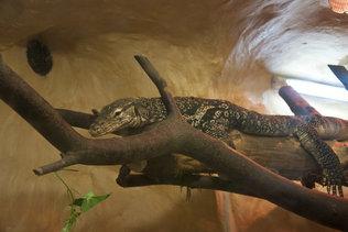 Рептилии в зоопарке