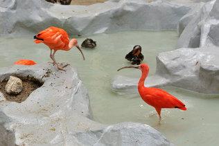 Экзотические птицы на зимовке