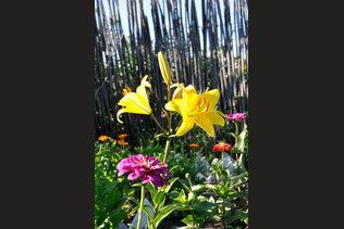 Летние цветочки