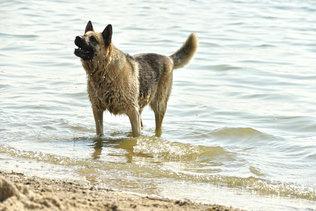 Пошли купаться!