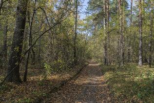 Тёплый день в осеннем лесу
