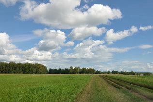 По полевой дороге