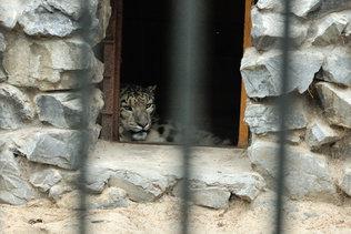 Кошачьи в новосибирском зоопарке
