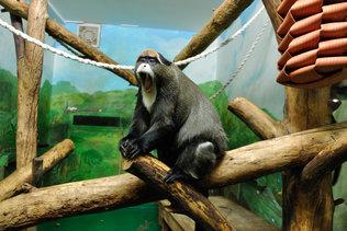 Приматы на зимовке