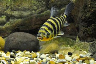 Рыбы Новосибирского зоопарка