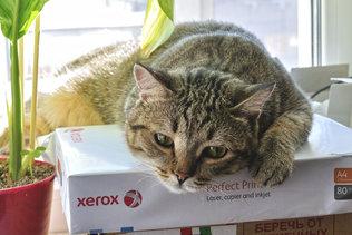 Кузьма рекламирует бумагу Xerox