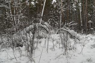 Зима в лесу