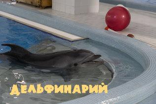 Новосибирский дельфинарий