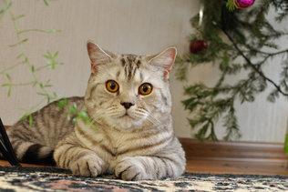 Кот Маркиз встречает новый год
