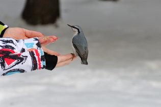 Ручные птички
