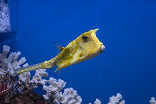 Экзотические морские рыбы