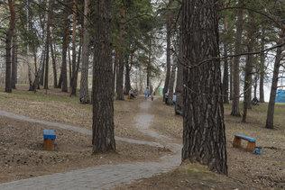 Майский день в парке у моря Обского