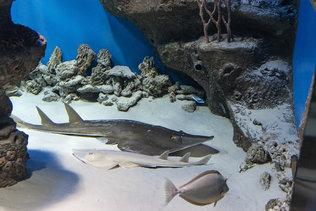 На выставке морских рыб