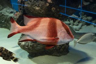 """Морская фауна в центре океанографии """"Дельфиния"""""""