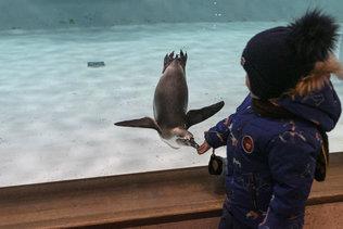 Пингвин и ребенок