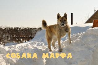 Собака Марфа