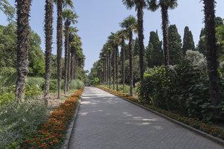 Пальмовая аллея Никитского ботанического сада в Ялте
