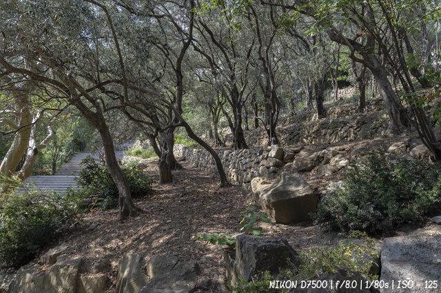 И на камнях растут деревья в Никитском ботаническом саду