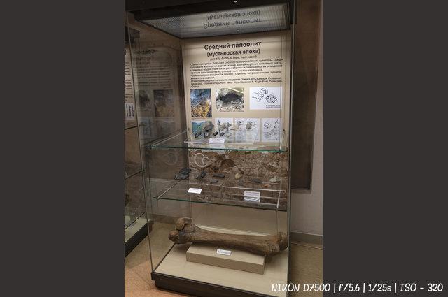 Кости мамонта в музее Анохина в Горно-Алтайске