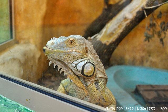 Земноводные в Новосибирском зоопарке