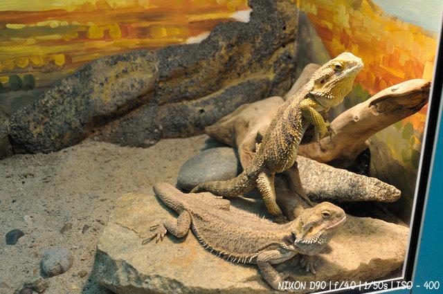 Рептилии за стеклом