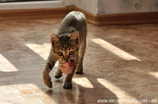 Кот Кузьма с добычей