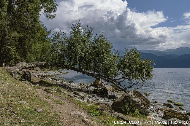 Каменистый берег Телецкого озера