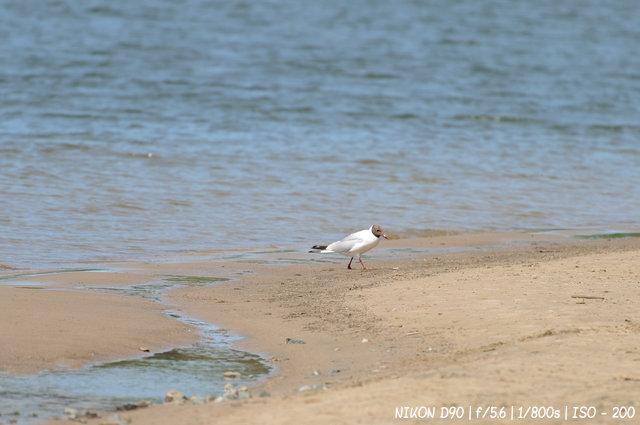 Чайка на берегу