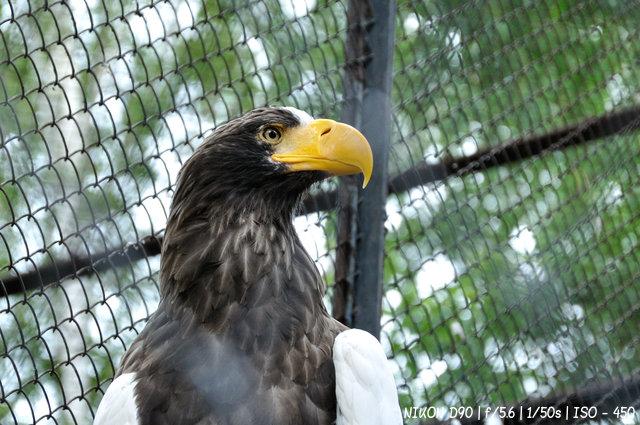 Грозная птица в Новосибирском зоопарке