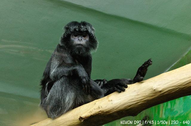 Приматы в Новосибирском зоопарке