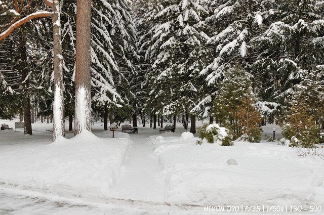 Где-то в заельцовском лесу