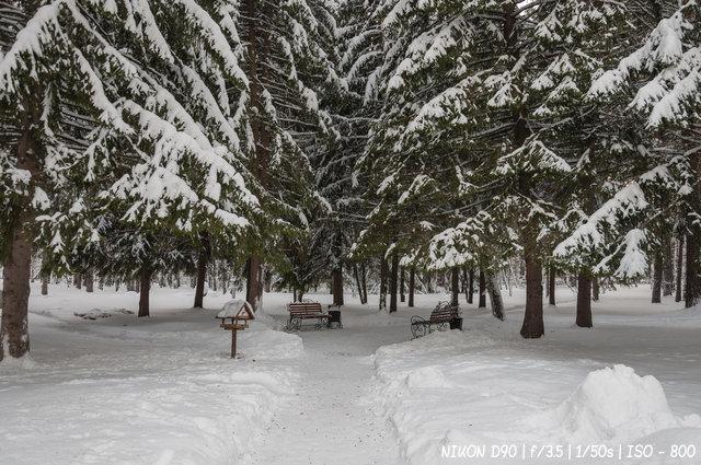 Зимний отдых в парке