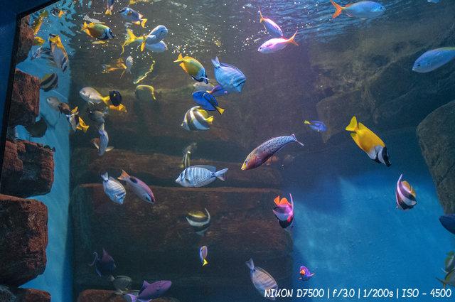 Морские рыбы в дельфинарии Новосибирска