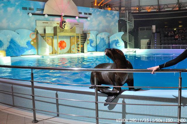 Морские львы в цирковом шоу