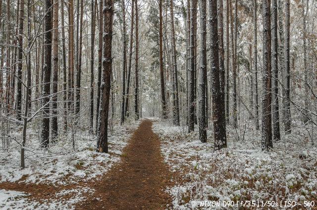 Начало зимы в лесу