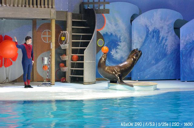 Северный морской лев Сивуч