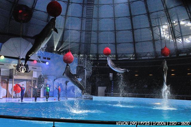 Тихоокеанские дельфины - афалины