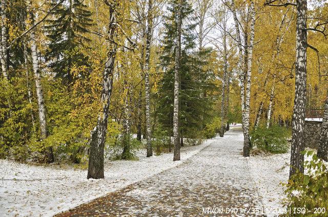 Начало зимы в Академгородке