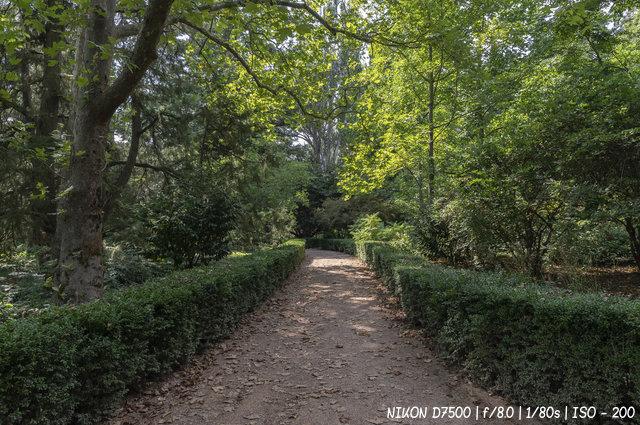На прогулке по аллеям Никитского ботанического сада